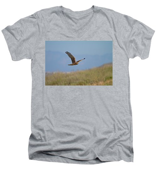 Northern Harrier In Flight Men's V-Neck T-Shirt by Duncan Selby