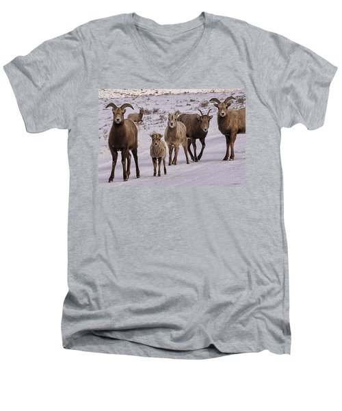 Men's V-Neck T-Shirt featuring the photograph Not Too Sheepish by Priscilla Burgers