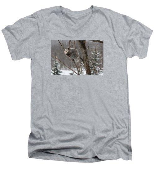 Opossum In A Tree Men's V-Neck T-Shirt by Lucinda VanVleck