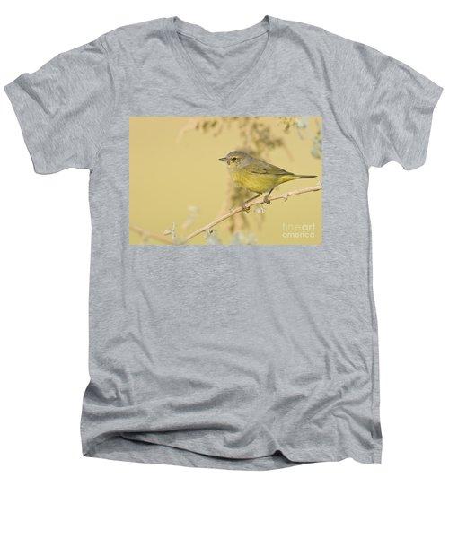 Orange Crowned Warbler Men's V-Neck T-Shirt by Bryan Keil