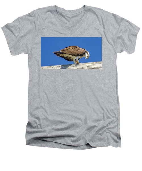 Osprey Eating Lunch Men's V-Neck T-Shirt by Dale Powell