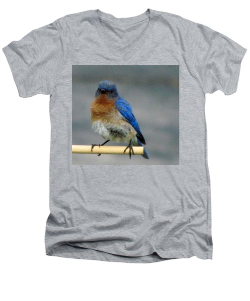 Our Own Mad Bluebird Men's V-Neck T-Shirt by Betty Pieper