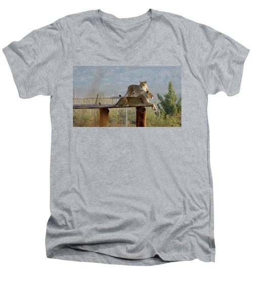 Out Of Africa Lions Men's V-Neck T-Shirt