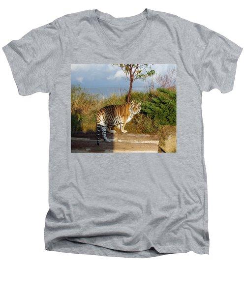Out Of Africa  Tiger 1 Men's V-Neck T-Shirt