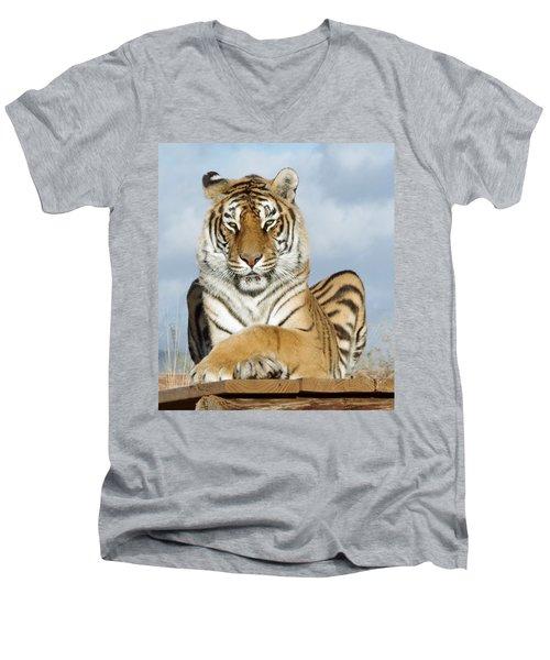 Out Of Africa Tiger 3 Men's V-Neck T-Shirt