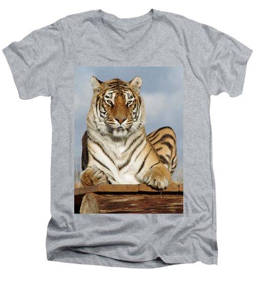 Out Of Africa Tiger 4 Men's V-Neck T-Shirt