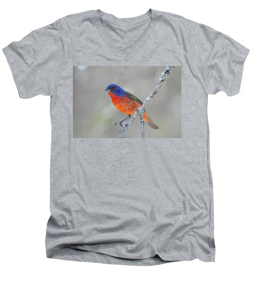 Painted Bunting Men's V-Neck T-Shirt