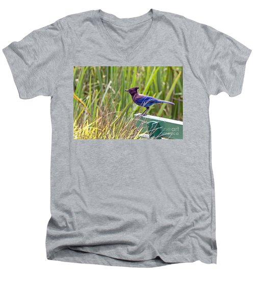 Perching Jay Men's V-Neck T-Shirt
