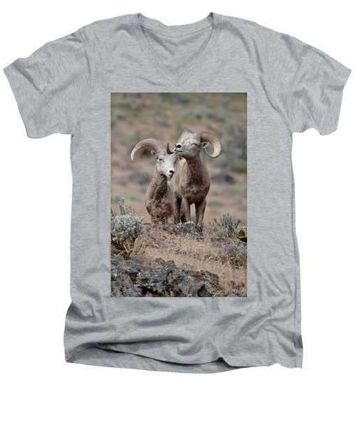 Men's V-Neck T-Shirt featuring the photograph Playfull Rams by Athena Mckinzie