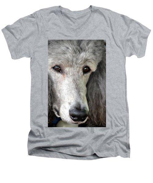 Portrait Of A Silver Poodle Men's V-Neck T-Shirt
