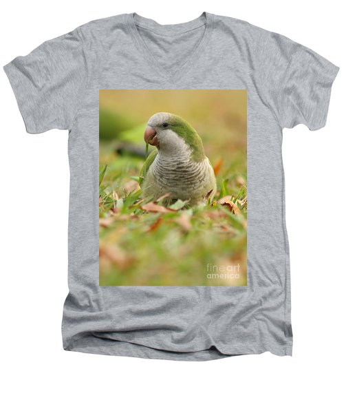 Quaker Parrot #3 Men's V-Neck T-Shirt