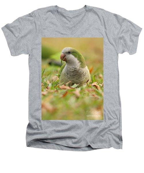 Quaker Parrot #3 Men's V-Neck T-Shirt