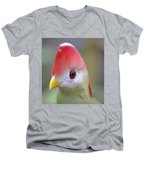 Red Crested Turaco Men's V-Neck T-Shirt