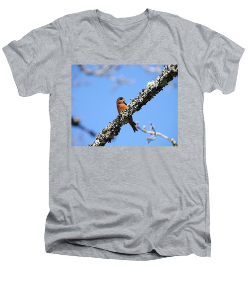 Red Crossbill Finch Men's V-Neck T-Shirt by Marilyn Wilson