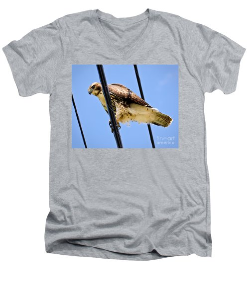 Redtailed Hawk Men's V-Neck T-Shirt