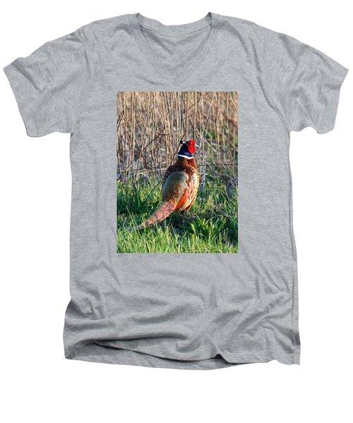 Ring-necked Pheasant Men's V-Neck T-Shirt