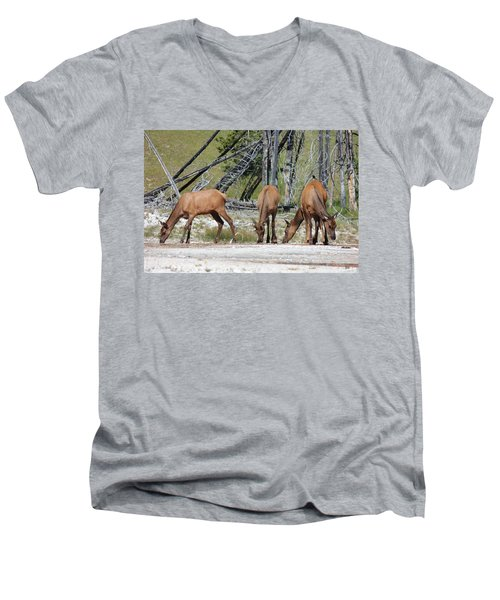 Rocky Mountain Elk Men's V-Neck T-Shirt
