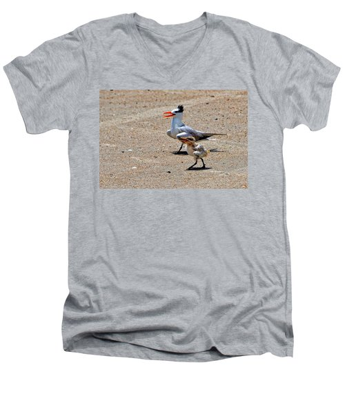 Men's V-Neck T-Shirt featuring the photograph Royal Tern With Chick by Ludwig Keck