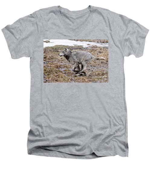 Men's V-Neck T-Shirt featuring the photograph Running Timber Wolf by Wolves Only