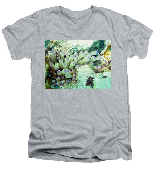 Sea Anemone With Squat Anemone Shrimp Family Men's V-Neck T-Shirt by Amy McDaniel
