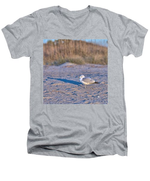 Seagull At Sunrise Men's V-Neck T-Shirt