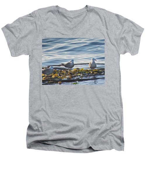 Seagulls In Victoria Bc Men's V-Neck T-Shirt