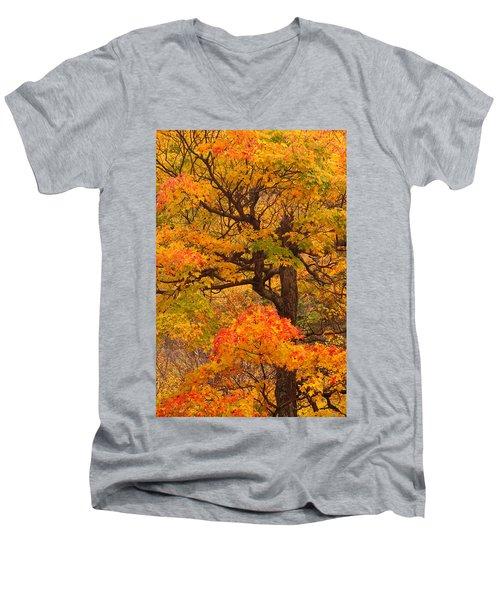 Shapely Maple Tree Men's V-Neck T-Shirt