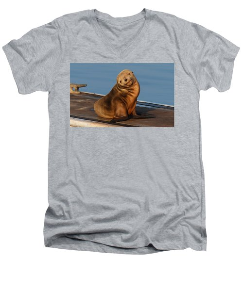 Shy Sea Lion Pup  Men's V-Neck T-Shirt