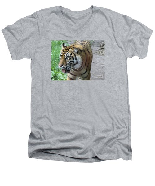 Men's V-Neck T-Shirt featuring the photograph Siberian Tiger by Lingfai Leung