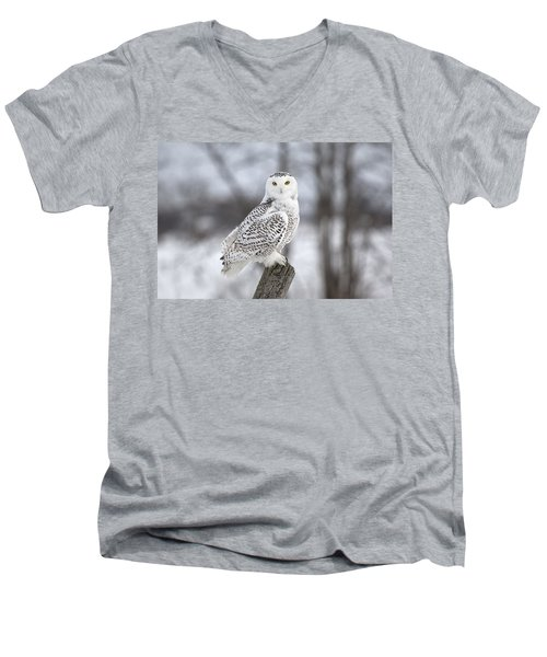 Snowy Owl Men's V-Neck T-Shirt