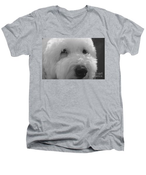 Soulful Eye's Old English Sheep Dog Men's V-Neck T-Shirt