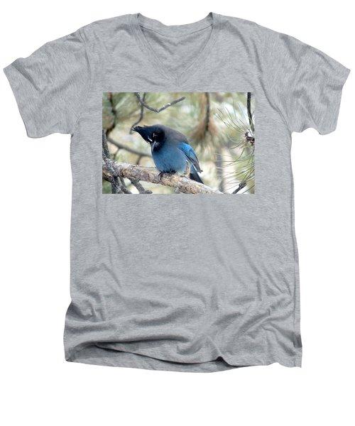 Steller's Jay Looking Down Men's V-Neck T-Shirt by Marilyn Burton