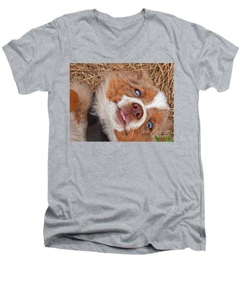 Men's V-Neck T-Shirt featuring the photograph Sweet Australian Shepherd Puppy Face Art Prints by Valerie Garner