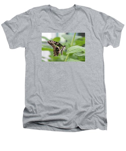 Tailed Jay Butterfly #3 Men's V-Neck T-Shirt