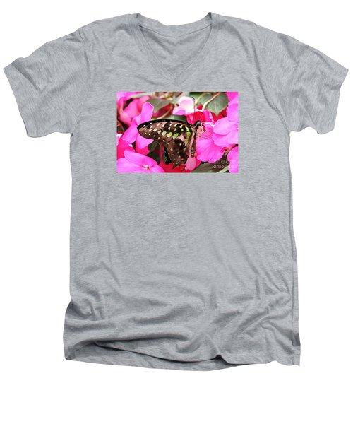 Tailed Jay Butterfly #4 Men's V-Neck T-Shirt