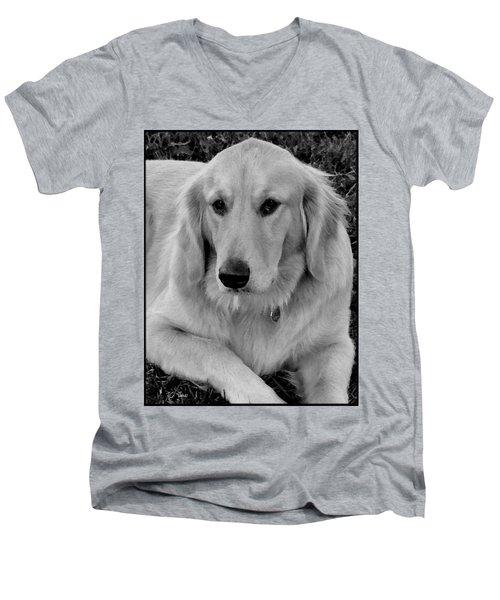 Men's V-Neck T-Shirt featuring the photograph The Golden Retriever by James C Thomas