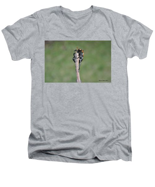 Men's V-Neck T-Shirt featuring the photograph The Posing Beetle by Verana Stark