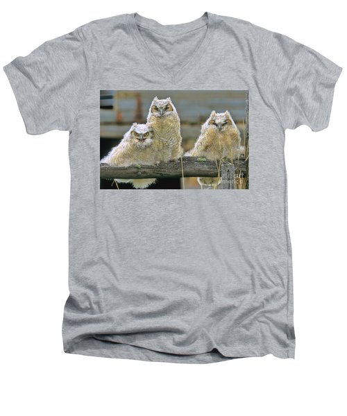 Three Great-horned Owl Chicks Men's V-Neck T-Shirt