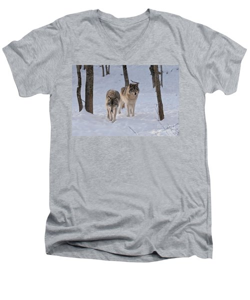 Men's V-Neck T-Shirt featuring the photograph Timber Wolf Pair  by Wolves Only