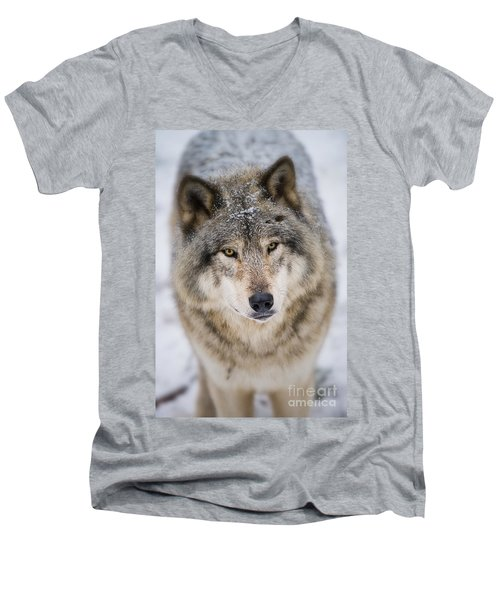 Timber Wolf Pictures 254 Men's V-Neck T-Shirt