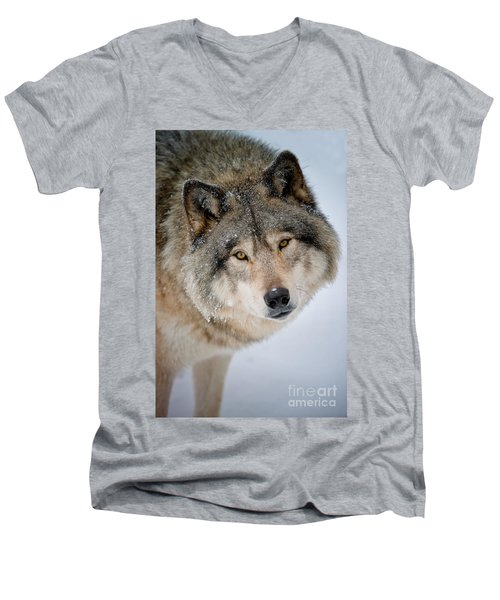 Timber Wolf Pictures 255 Men's V-Neck T-Shirt