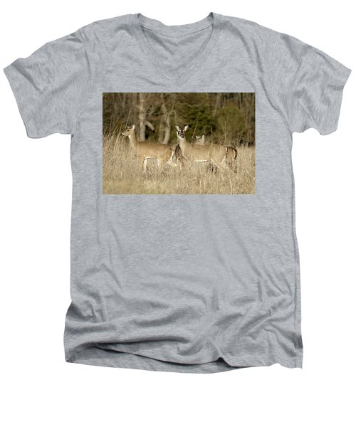 Vigilant White-tailed Deer Men's V-Neck T-Shirt