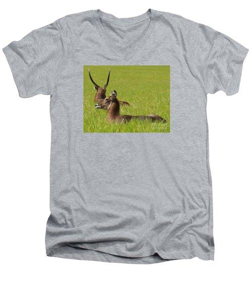 Waterbuck Antelope Men's V-Neck T-Shirt