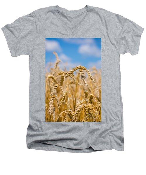Wheat Men's V-Neck T-Shirt by Cheryl Baxter