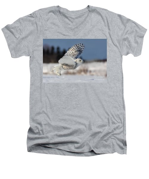 White Angel - Snowy Owl In Flight Men's V-Neck T-Shirt by Mircea Costina Photography