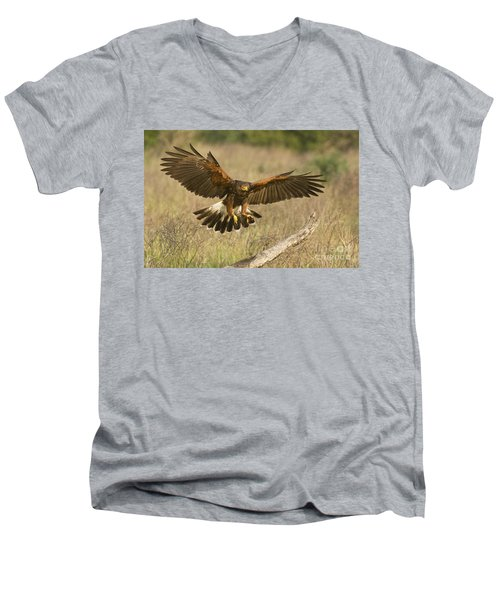 Wild Harris Hawk Landing Men's V-Neck T-Shirt by Dave Welling