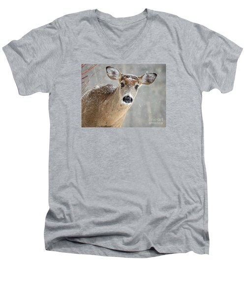 Winter Buck Men's V-Neck T-Shirt by Amy Porter