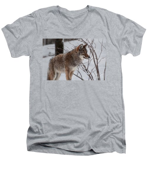 Winter Coyote Men's V-Neck T-Shirt by Bianca Nadeau