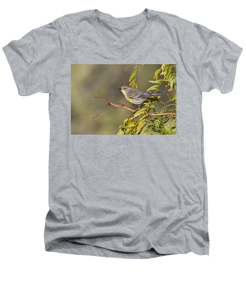 Yellow Rumped Warbler Men's V-Neck T-Shirt