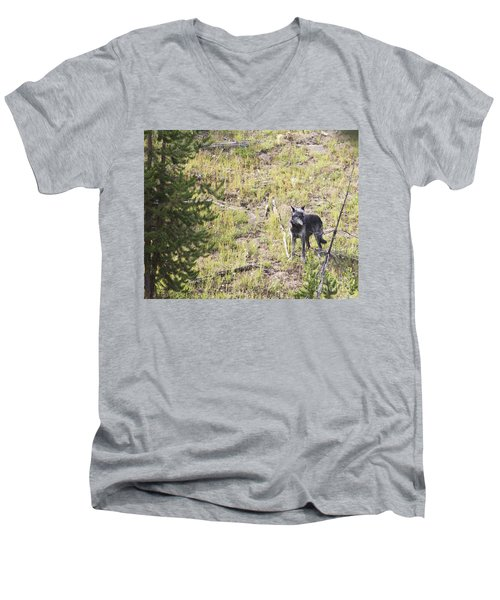 Men's V-Neck T-Shirt featuring the photograph Yellowstone Wolf by Belinda Greb